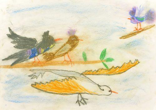 Mia Kragelj Leon: Skrivnostni svet ptic