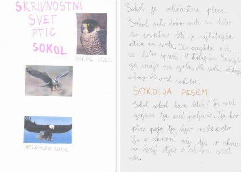 Zoja Cejan Šega: Skrivnostni svet ptic - Sokol