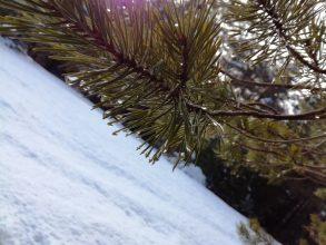 Nena Strle: Solze veselja dobi tudi bor, ko na jezeru topi se led