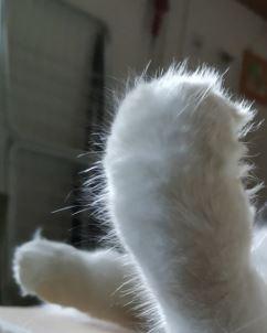 Fotografija, poslana za natečaj Če bi bil žival