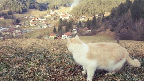 Žan Zabukovnik: Če bi bil maček, bi se povzpel na razgledno točko