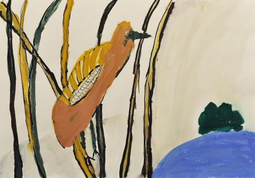 Andraž Kovačič: Skrivnostni svet ptic