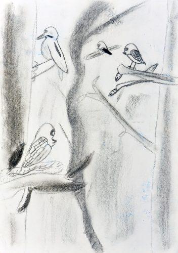 Maj Menard: Skrivnostni svet ptic