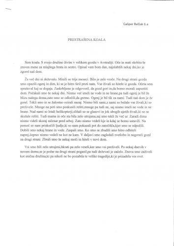 Gašper Belšak: Prestrašena koala