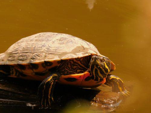 Nejc Stropnik: Če bi bil želva bi imel močan oklep in veliko let