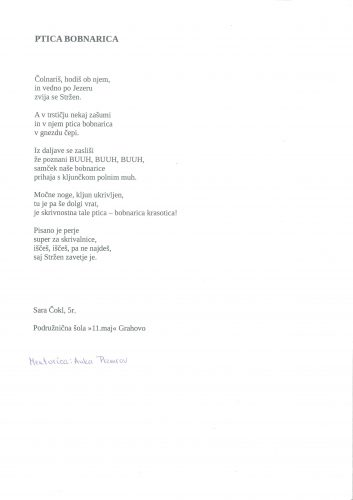 Sara Čokl: Ptica bobnarica
