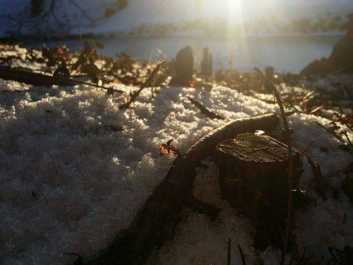 Jetmir Sylejmani: Nekoč sem bil drevo