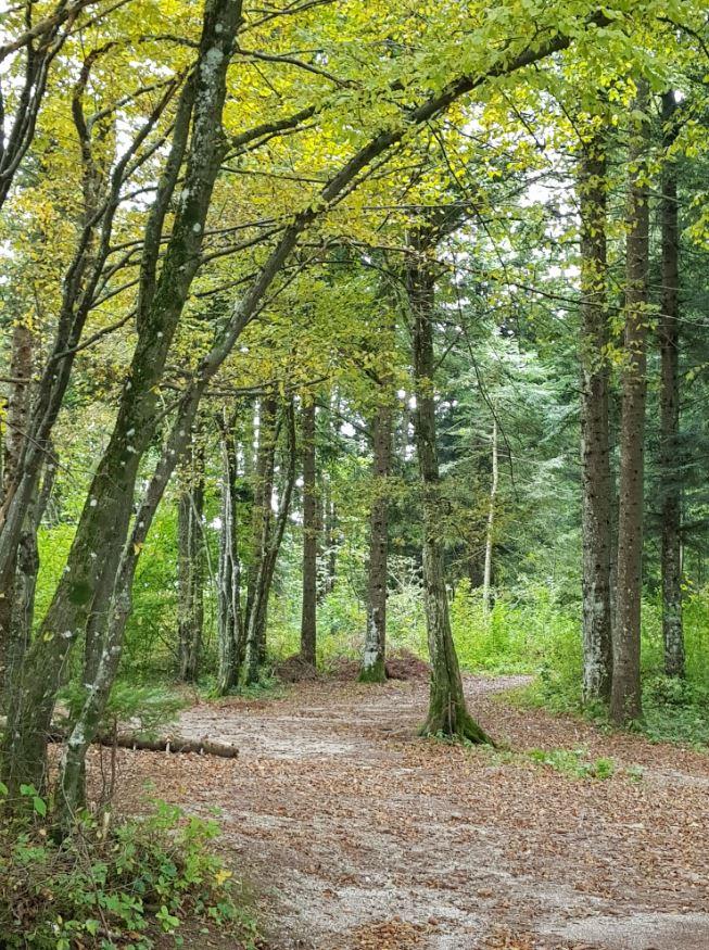 Pot Drvošec v zavetju gozda