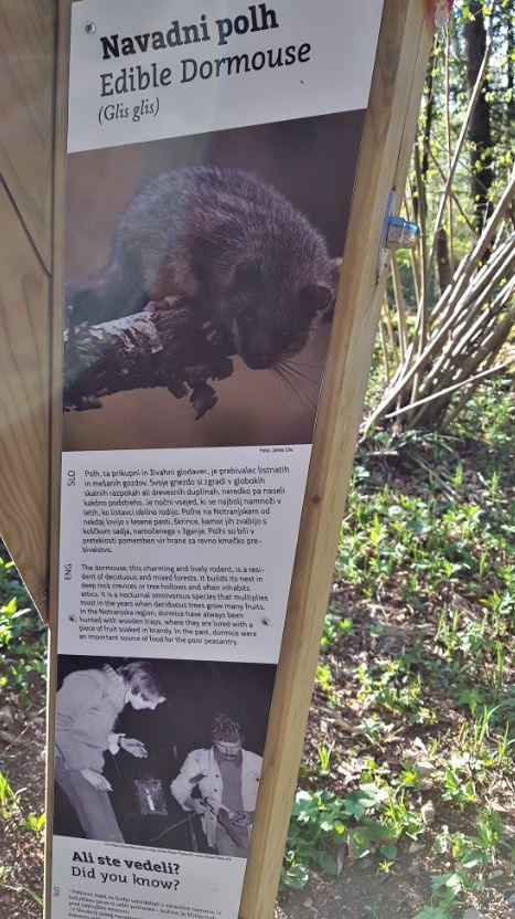 Točka, posvečena polhu. Polharjenje je na območju Notranjskega parka še danes priljubljeno. Nekoč večinoma za hrano, danes za zabavo, ki jo domačini priredijo po lovu.