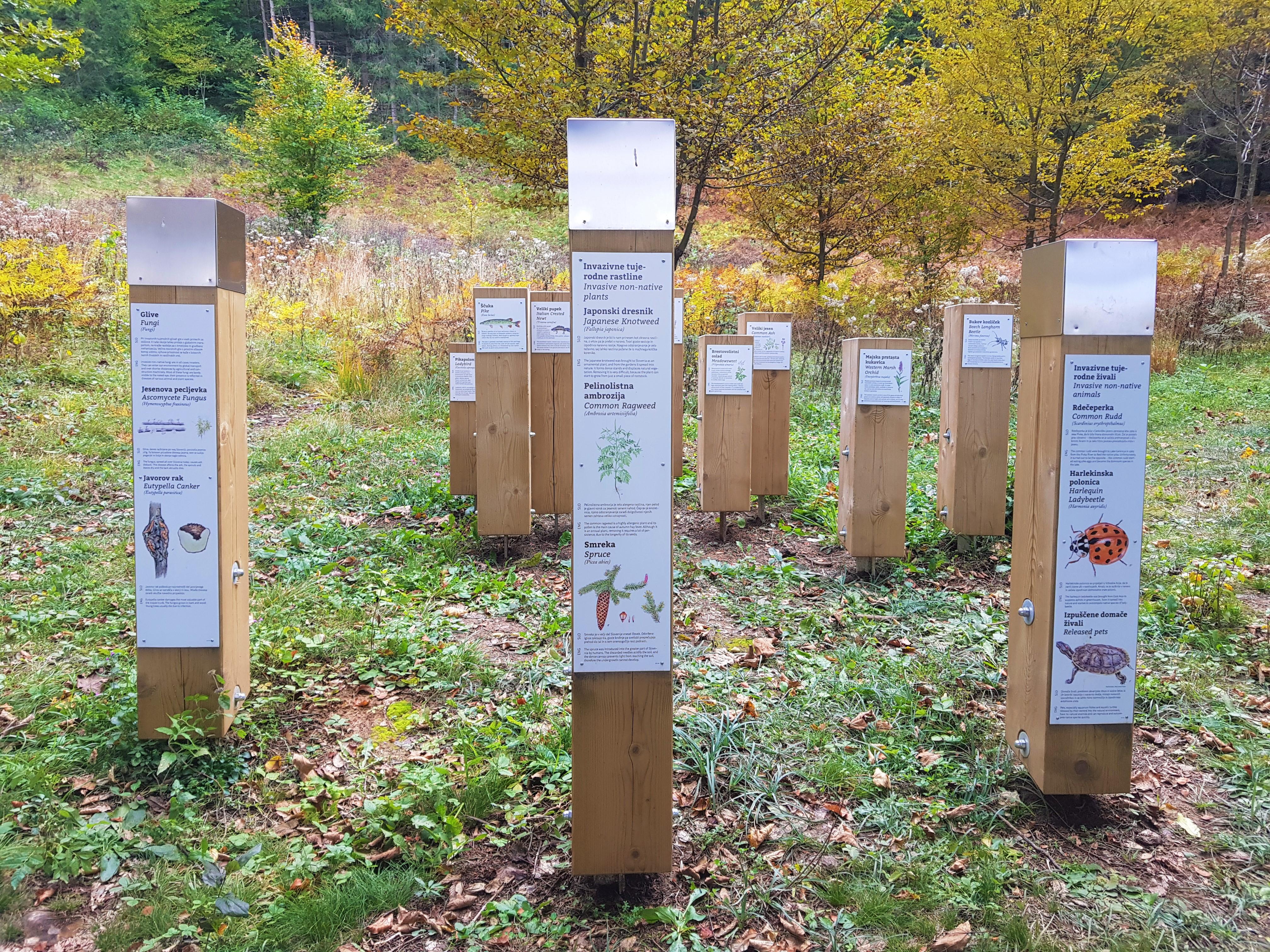 Stebri, ki predstavljajo domače in invazivne - tujerodne vrste v Notranjskem parku. Pocinov laz, Tematska pot Drvošec. Foto Eva Kobe