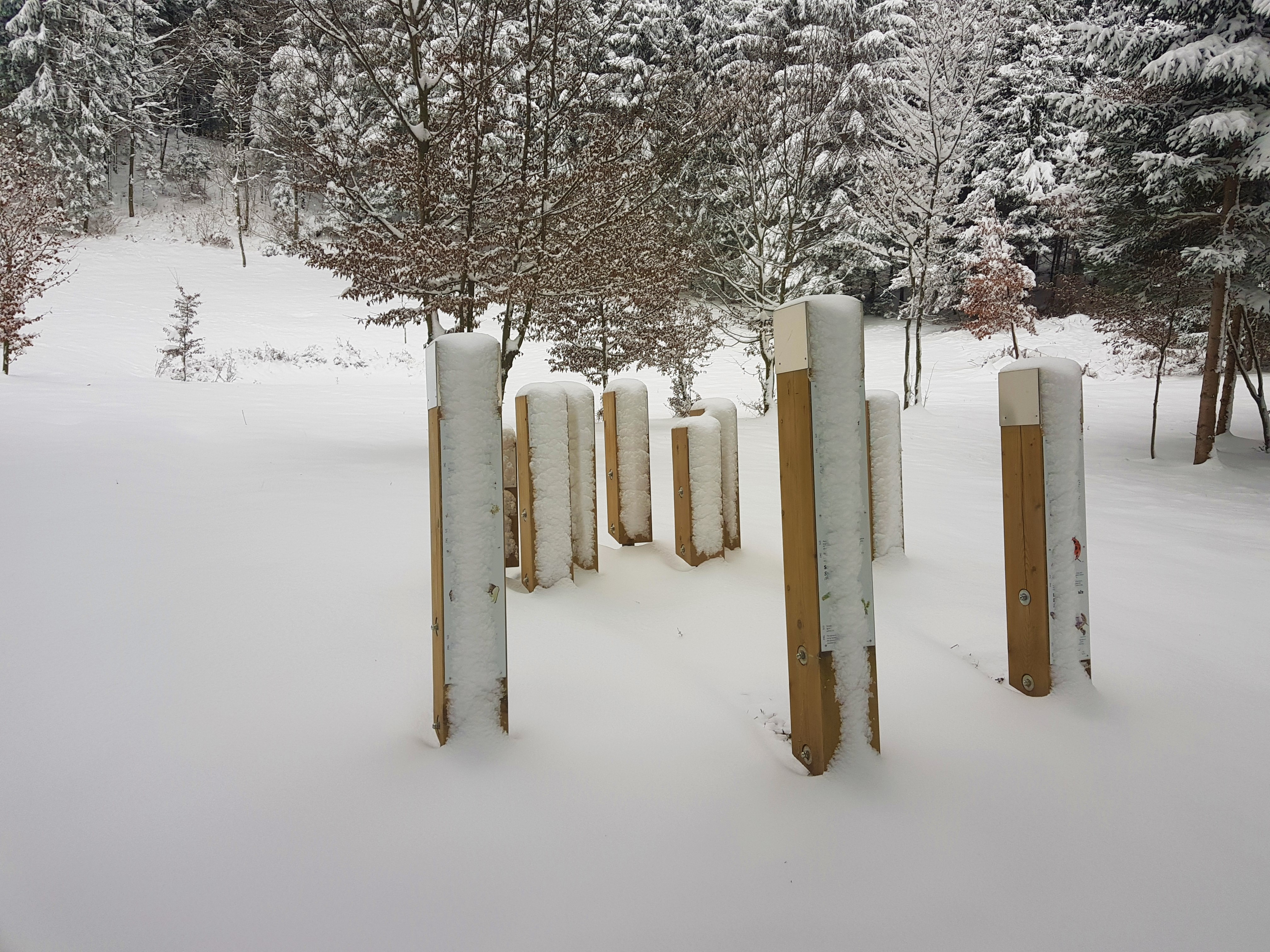 V Pocinovem lazu naletite na krog invazivnih in avtohtonih vrst v Notranjskem parku.