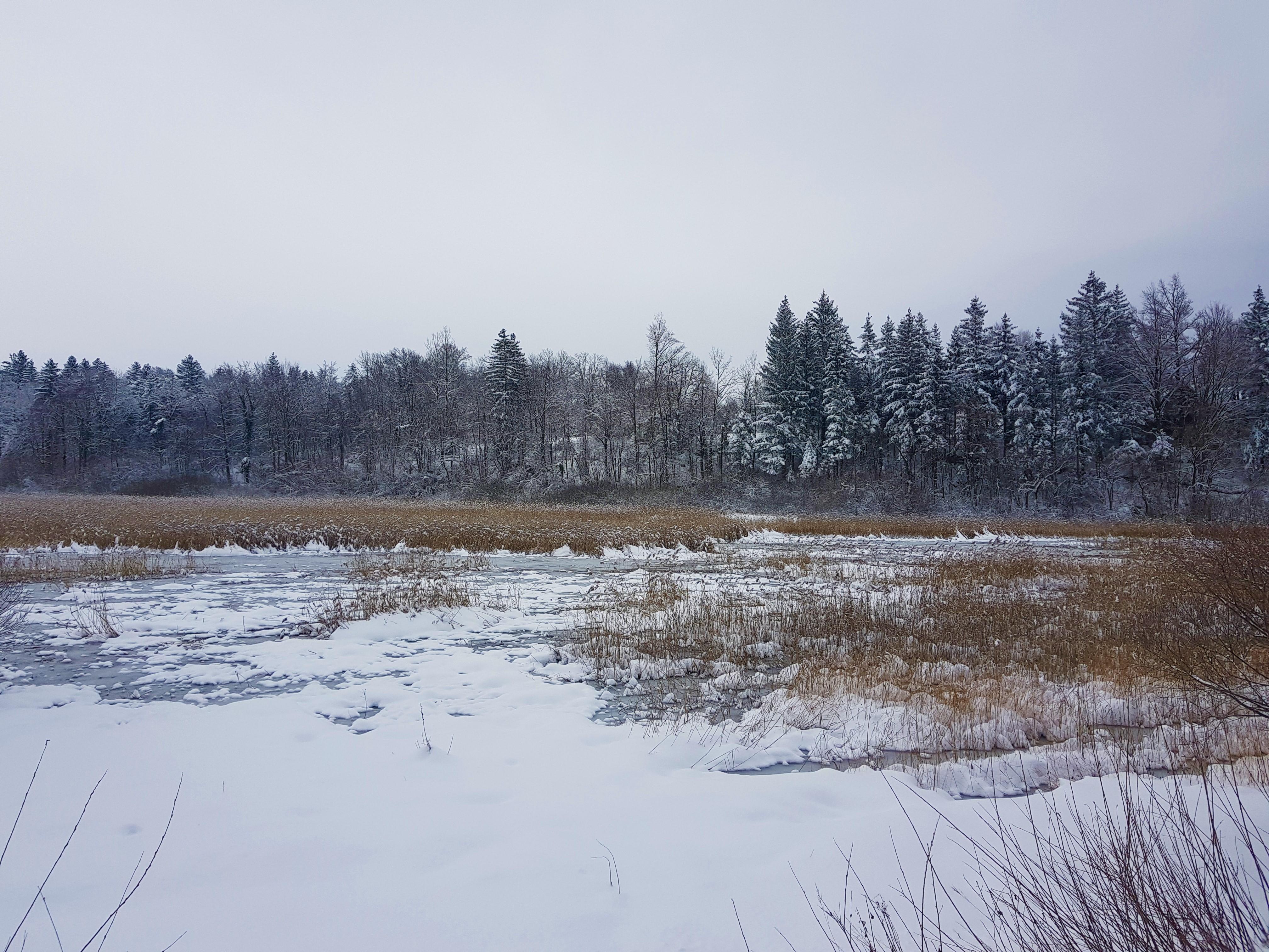 Tudi s te točke in z jezerskega brega par metrov naprej se ponujajo čudoviti pogledi na zimsko pravljico.