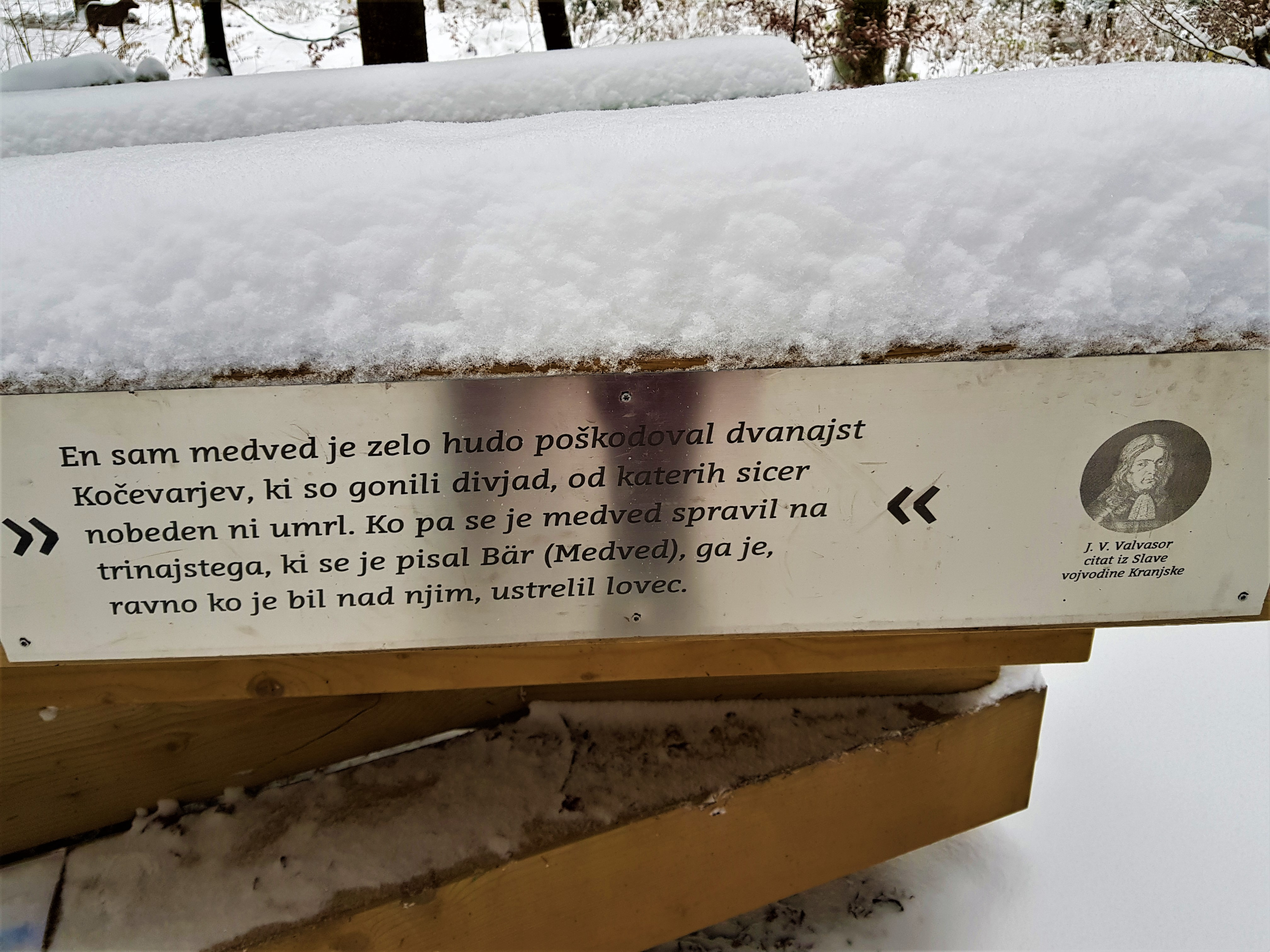 Zapis Janeza Vajkarda Valvasorja o notranjskih medvedih.